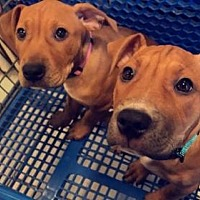 Adopt A Pet :: Ruby & Saphire - New Lisbon, NJ