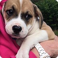 Adopt A Pet :: Moon - Toms River, NJ