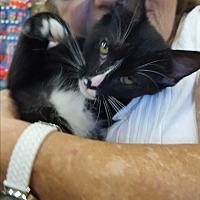 Adopt A Pet :: Johnny boy - Palm Springs, CA