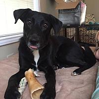 Adopt A Pet :: Jolene - Brunswick, ME