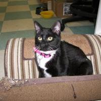 Adopt A Pet :: Cherokee Rose - Thomasville, GA