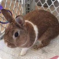 Adopt A Pet :: Alvin - Tampa, FL