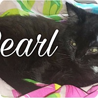Adopt A Pet :: Pearl - Princeton, WV