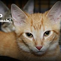 Adopt A Pet :: Kino - Springfield, PA
