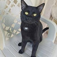 Adopt A Pet :: Asiago - Umatilla, FL