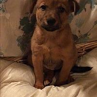 Adopt A Pet :: ESPRESSO-ADOPTED - Cranston, RI