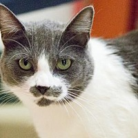 Adopt A Pet :: Navajo - St. Paul, MN