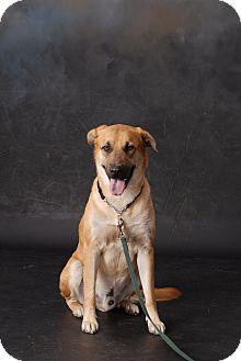 Anatolian Shepherd/Shepherd (Unknown Type) Mix Dog for adoption in White Settlement, Texas - Gabriel - Adopted