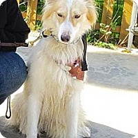 Adopt A Pet :: Leia - Riverside, CA