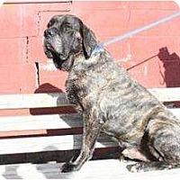 Adopt A Pet :: Duke - Asheboro, NC