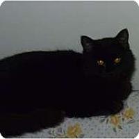 Adopt A Pet :: Marzipan - Hamburg, NY