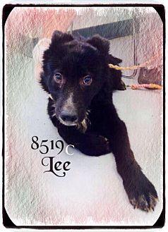 Labrador Retriever Mix Dog for adoption in Dillon, South Carolina - Lee