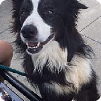 Adopt A Pet :: Endor - Oliver Springs, TN
