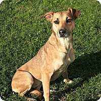 Adopt A Pet :: Janice - Lufkin, TX