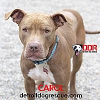 Adopt A Pet :: Carol - St. Clair Shores, MI
