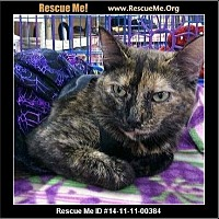 Adopt A Pet :: Jeannie - Beaumont, TX
