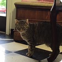 Adopt A Pet :: Emily Mama - Diamond Springs, CA