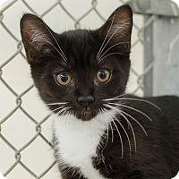 Adopt A Pet :: Paige - Greenwood, SC