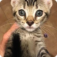 Adopt A Pet :: Finn - Tracy, CA