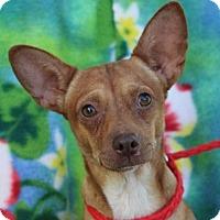 Adopt A Pet :: GINGER - Red Bluff, CA