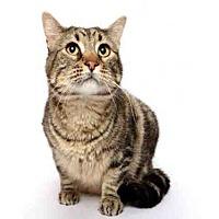 Adopt A Pet :: HOWIE - Murray, UT
