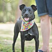 Adopt A Pet :: Kora - Tomball, TX