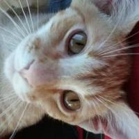 Adopt A Pet :: Everest - Fort Collins, CO