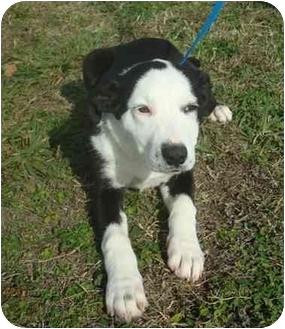 Hound (Unknown Type) Mix Puppy for adoption in Brenham, Texas - Buttons