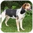 Photo 2 - Bluetick Coonhound/Coonhound Mix Dog for adoption in Knapp, Wisconsin - Cletus