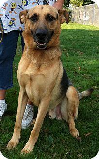 German Shepherd Dog Mix Dog for adoption in Salem, Ohio - Draco