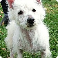 Adopt A Pet :: MISTY - GARRETT, IN