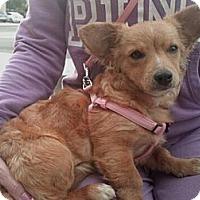 Adopt A Pet :: Vicki - Encinitas, CA