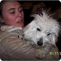Adopt A Pet :: Jasper - Honaker, VA