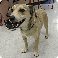 Adopt A Pet :: Binx - Gilbert, AZ