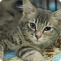 Adopt A Pet :: Jeannie - Sacramento, CA