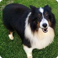 Adopt A Pet :: Ryan - Pittsburgh, PA