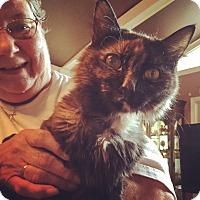 Adopt A Pet :: Loki - Raleigh, NC