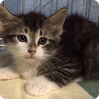 Adopt A Pet :: Phoenix - Delray Beach, FL
