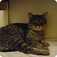 Adopt A Pet :: Gurgi - Colorado Springs, CO