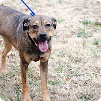 Adopt A Pet :: Preslie - Arlington, TN