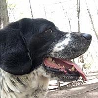 Adopt A Pet :: Max - Walden, NY