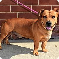 Adopt A Pet :: Boris - Charlotte, NC