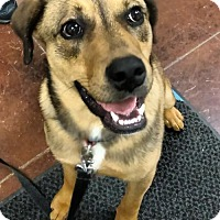 Adopt A Pet :: Fez - Winchester, TN