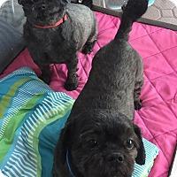 Adopt A Pet :: Bunny and Sammy - Bucks County, PA