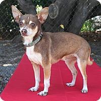 Adopt A Pet :: Cedar - Santa Barbara, CA