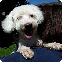 Adopt A Pet :: Clementine - Salem, OR