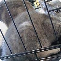 Adopt A Pet :: Bix - Oakland, CA