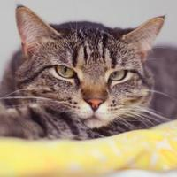 Adopt A Pet :: Sunshadow - New Freedom, PA