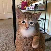 Adopt A Pet :: Ginny - Turnersville, NJ
