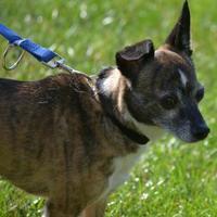 Adopt A Pet :: Benzie - Fairfield, OH